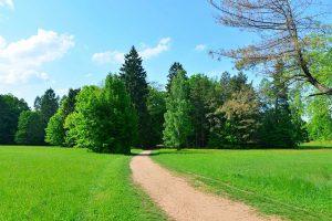 Park Pałacowy w Białowieży