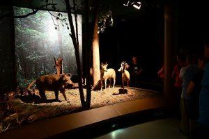 Muzeum Przyrodniczo - Leśne w Białowieży