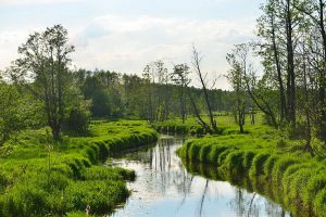 Rzeka Narewka